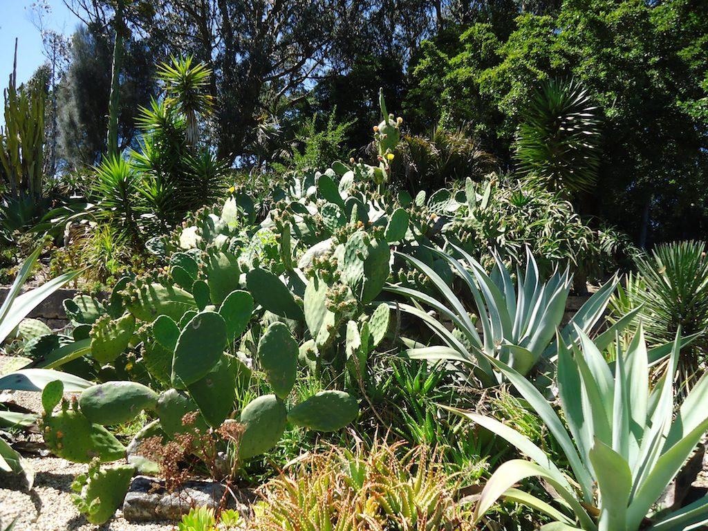 Giardino di succulente in California