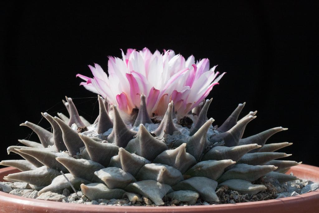 «Una pianta coltivata 'Wild' mi racconta storie su mondi lontani e mi trasmette emozioni vere»
