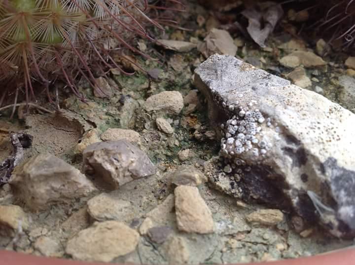 Crosta e licheni