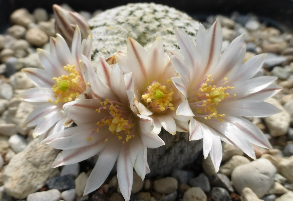 Substrate, loam, soil mix: which is the best soil for cactus and succulent plants?