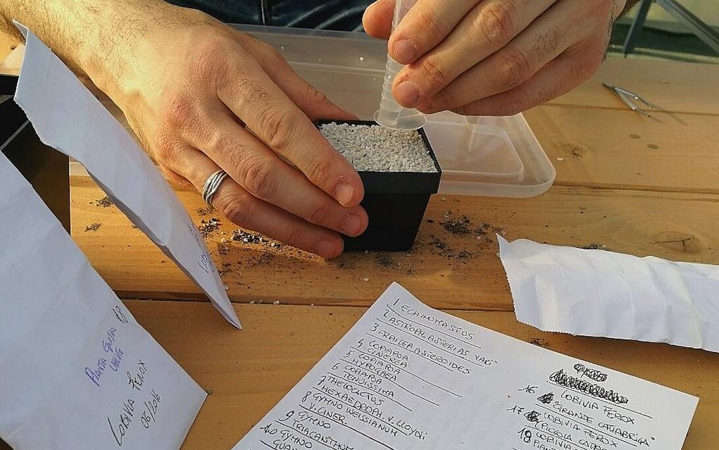 Procedura di semina