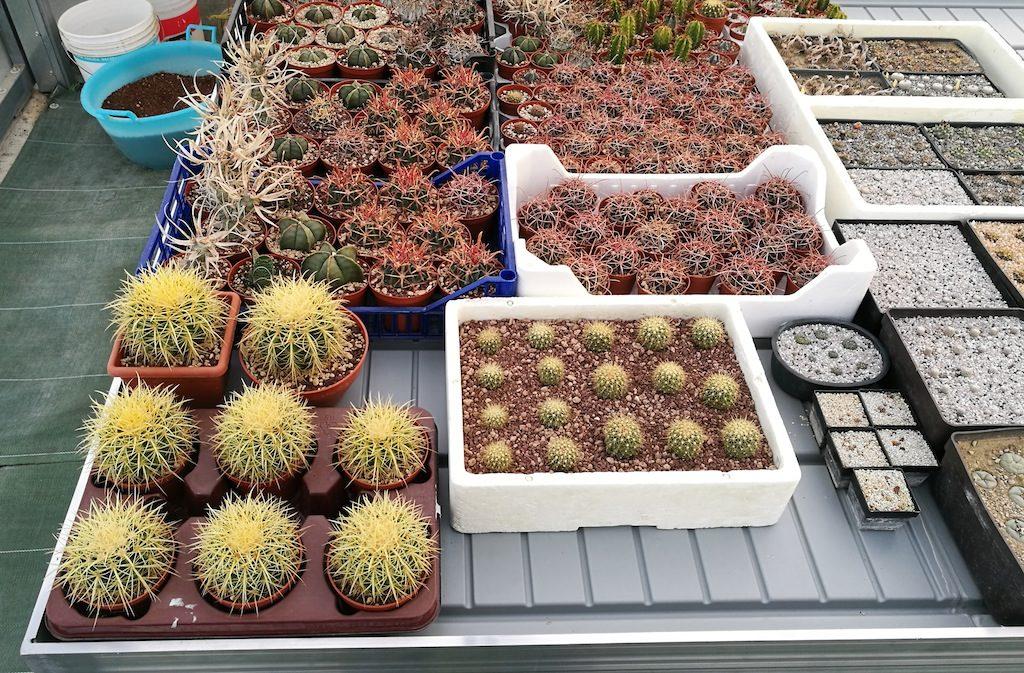 Il nuovo bancale con le semine di cactus