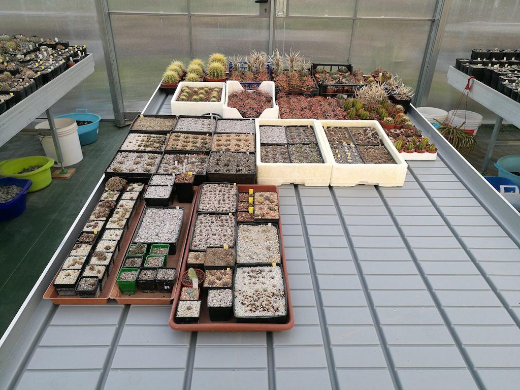 Il nuovo bancale con le mie semine