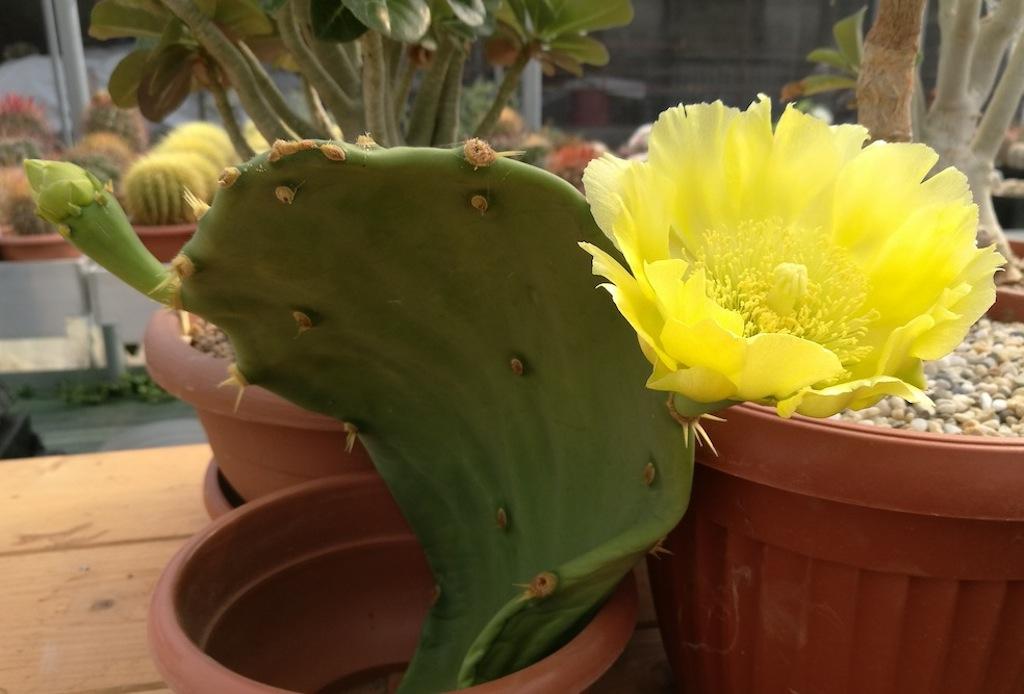 A corona, a stelo lungo, notturni: in fatto di fiori le piante grasse ne fanno davvero di tutti i colori!