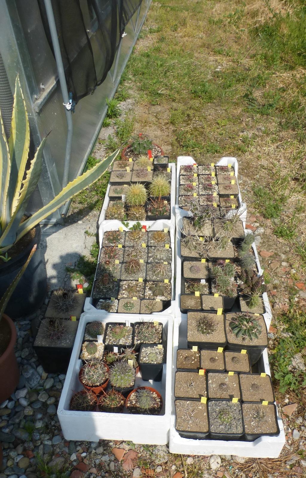 Alcune piante al sole a lato della serra