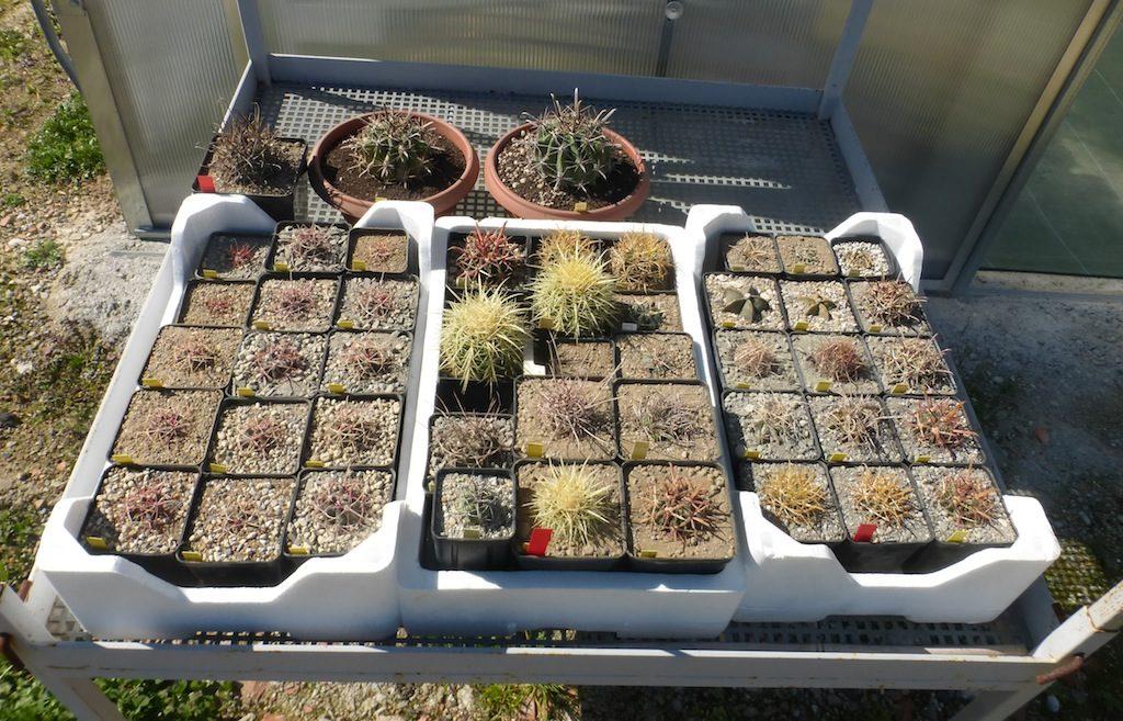 Alcune piante al sole