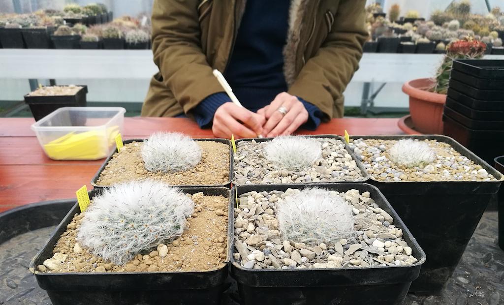 Il rinvaso mirato: piante da identica semina in terricci diversi per testare il substrato