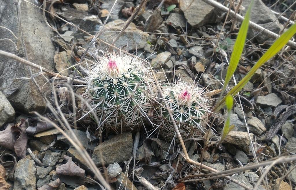 Sperimentare sempre e annotare tutto: ecco come si smontano le convinzioni errate sui cactus