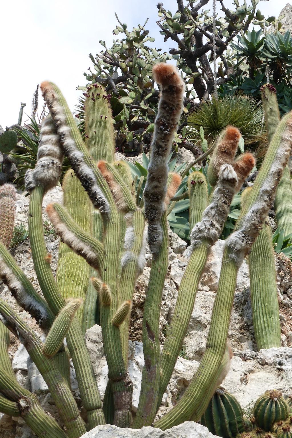 Giardino Esotico di Montecarlo