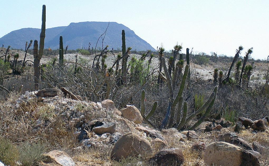 Panorama con alcuni cereus in Messico