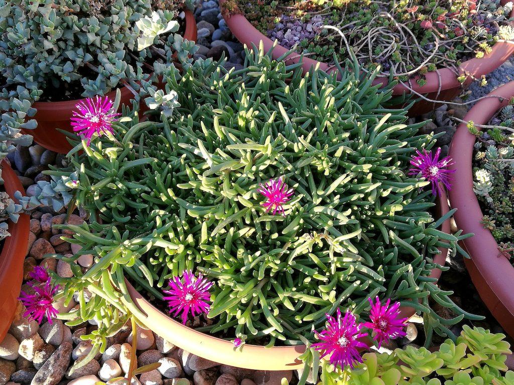 Prime fioriture primaverili