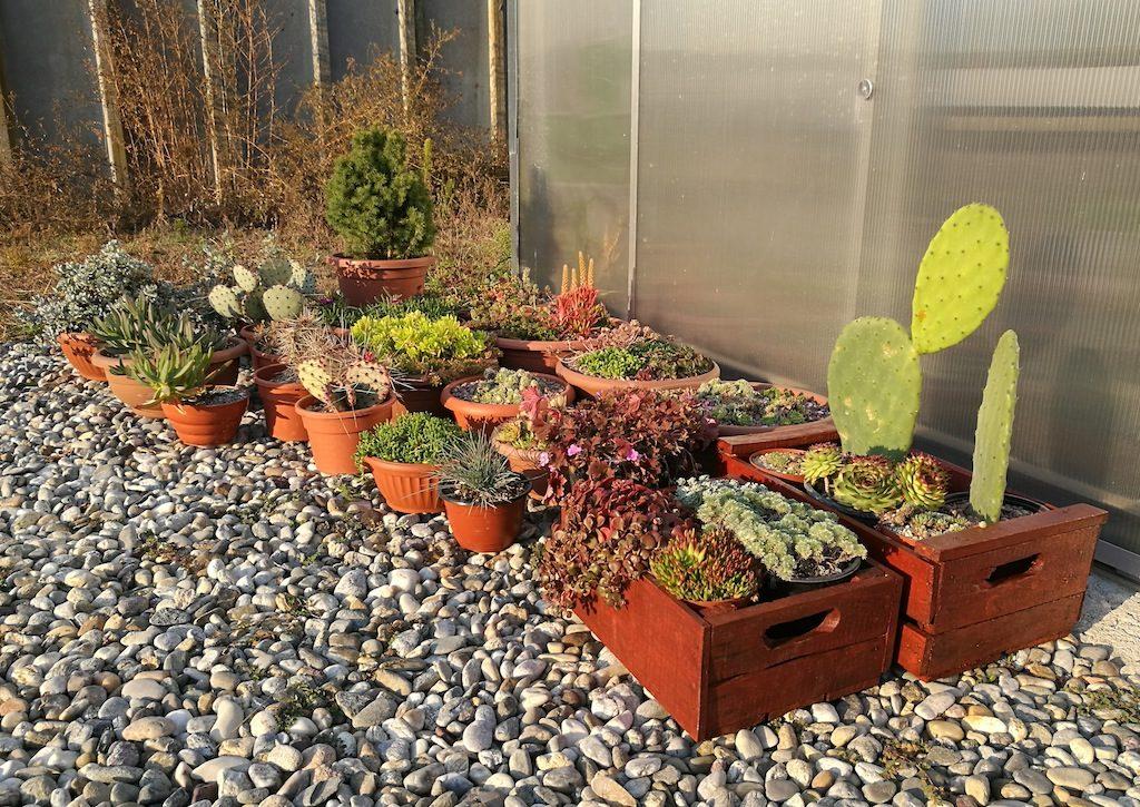 Alcune succulente all'esterno della serra