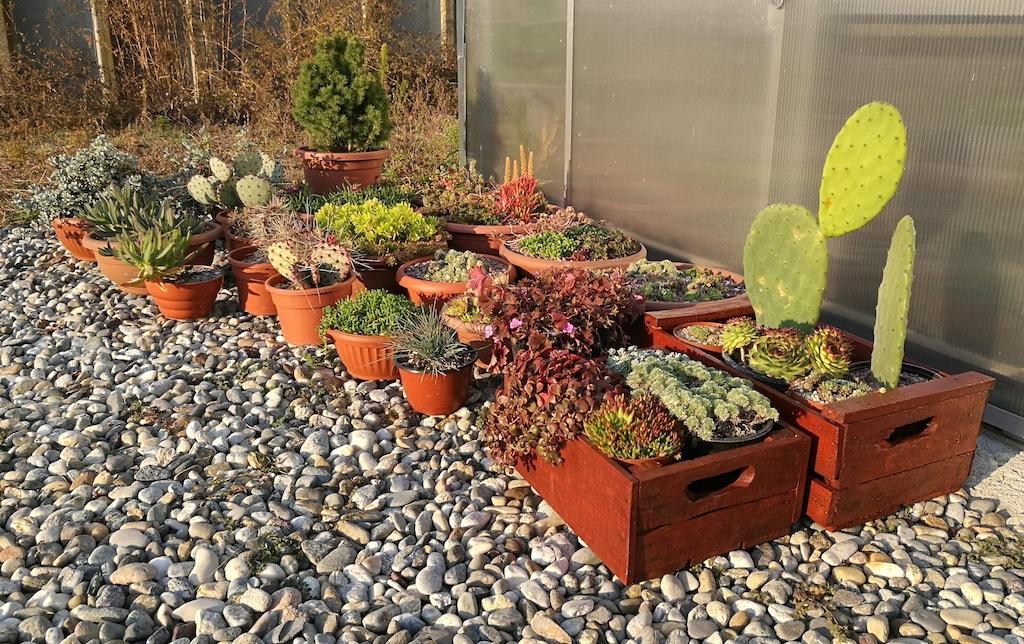 Piante succulente all'esterno della serra