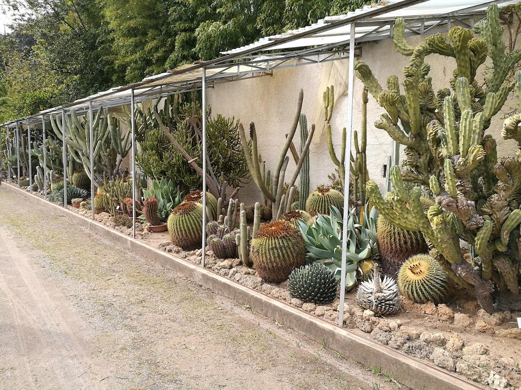 Kuentz Cactus