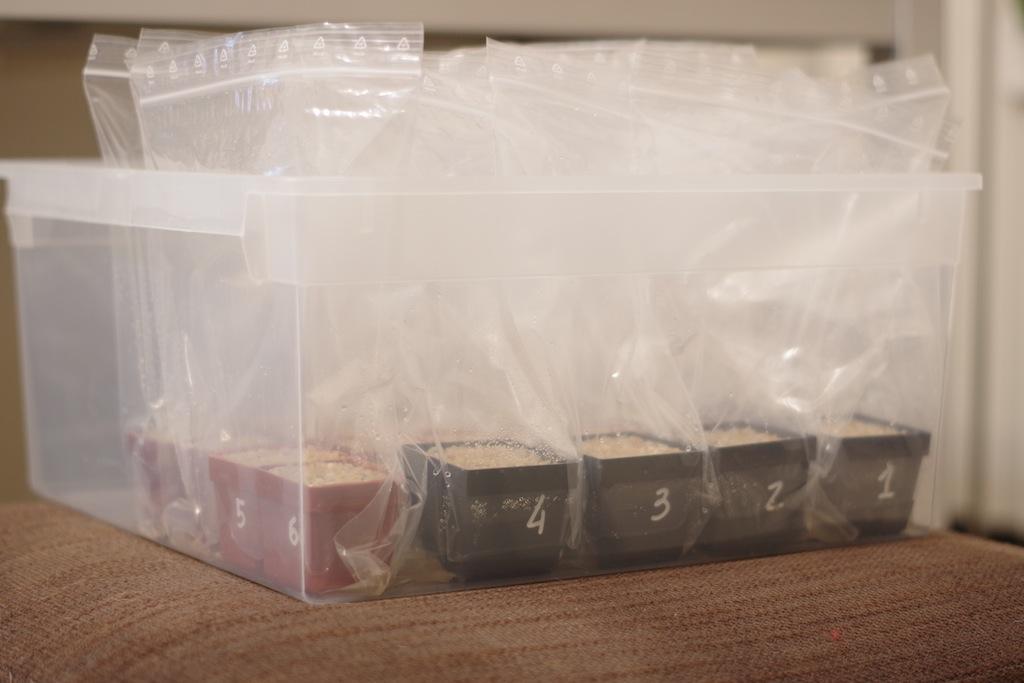Posizionamento dei vasi nel contenitore