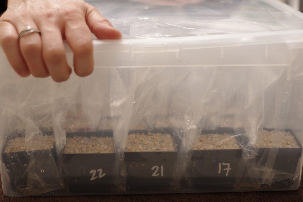 I vasi nel contenitore di plastica trasparente