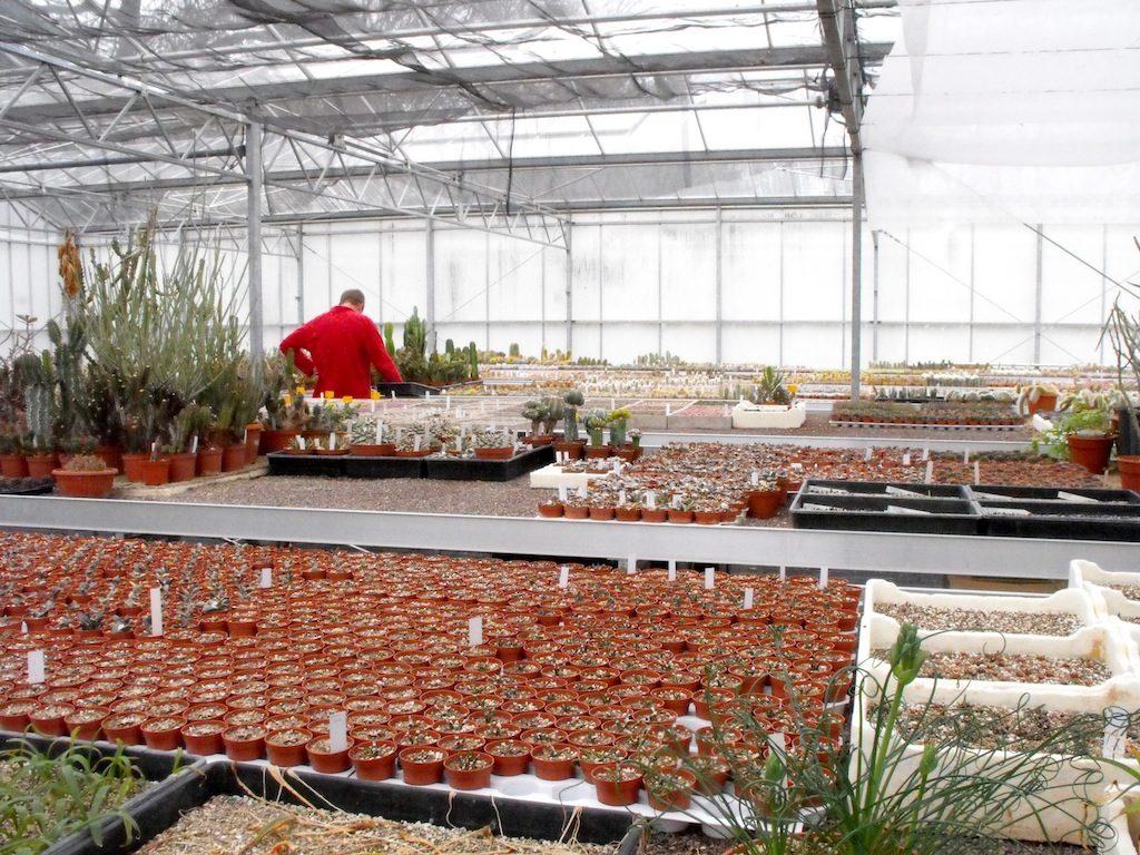 Vivaio Kuentz Cactus