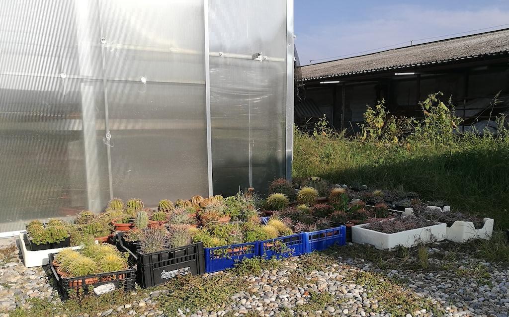 I cactus che tengo all'esterno della serra
