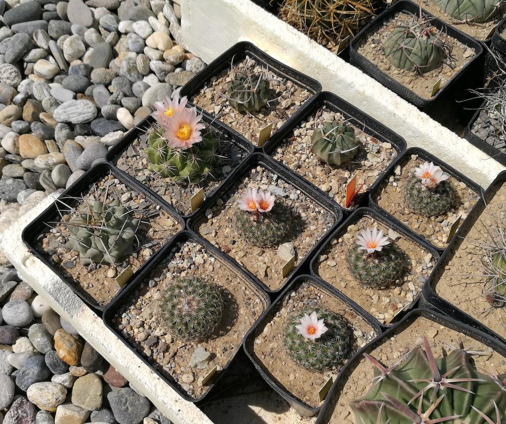 Alcune mie semine all'aperto