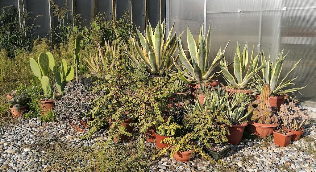 Come preparare cactus e succulente in vista dell'autunno e dell'inverno: ecco cosa fare