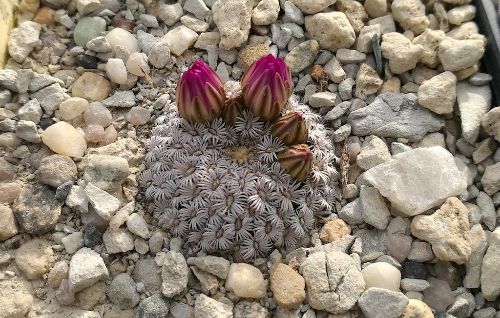 Le piante grasse e il freddo: con i giusti accorgimenti l'inverno non è un problema