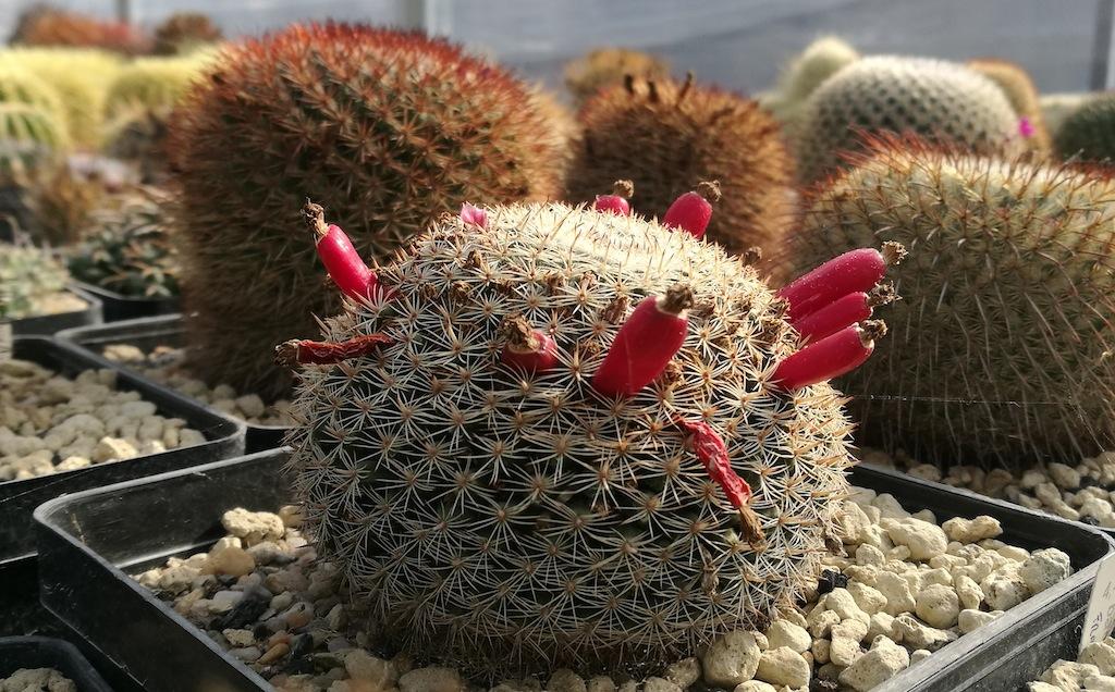 Primi bocci e nuove spine: di cosa hanno bisogno i cactus all'arrivo della primavera
