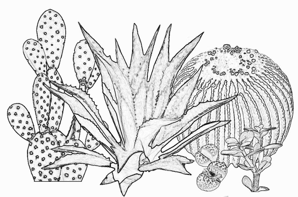 Riconoscere le piante grasse: una guida alla classificazione e all'identificazione