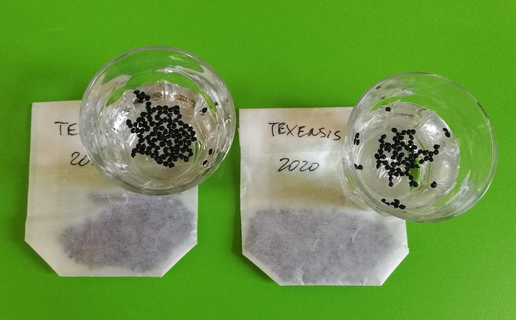 Echinocactus texensis semi in ammollo