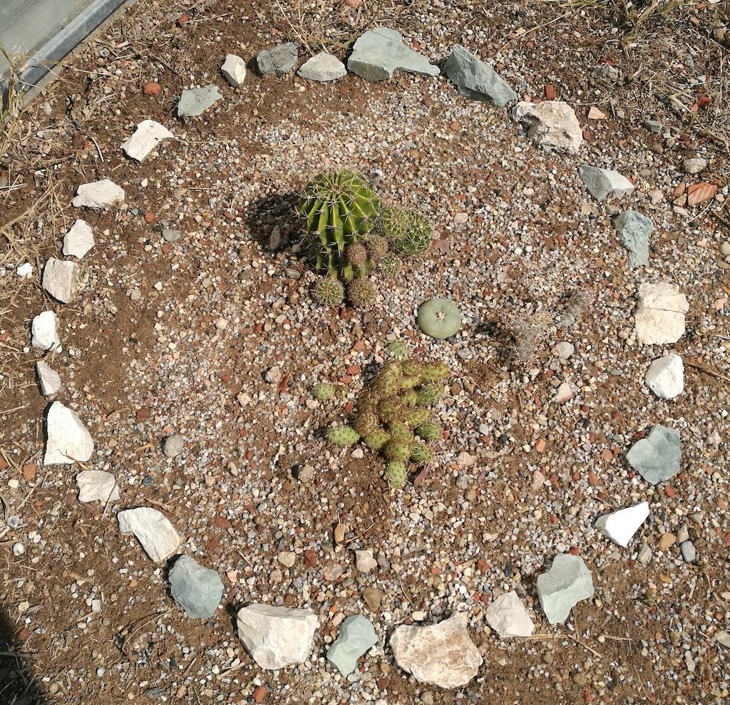 Piante in piena terra con pietre
