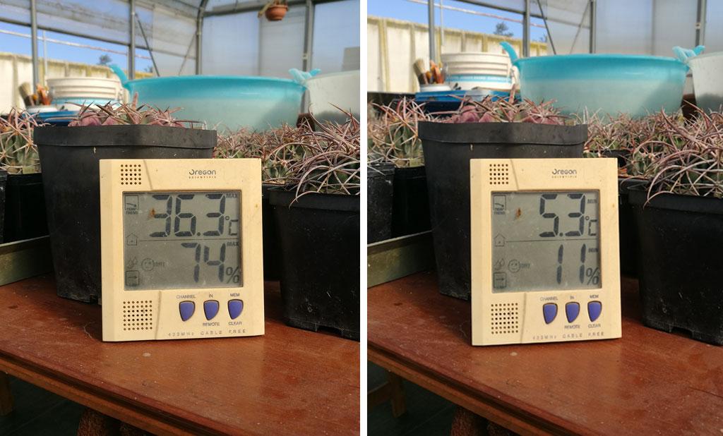 Sbalzi di temperatura e primi freddi: con cactus e succulente non c'è nulla da temere
