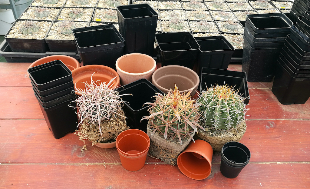 Plastic, terracotta, square or round? Here's how to choose pots for cacti and succulents