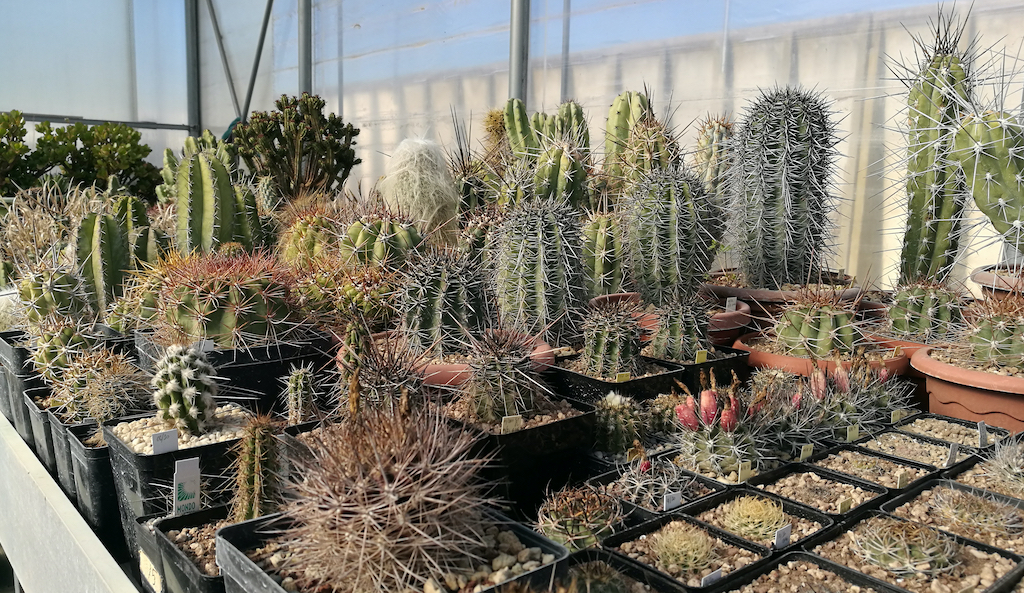 Preparing cacti and succulents for spring: exposure, fertilizing, here's what to do