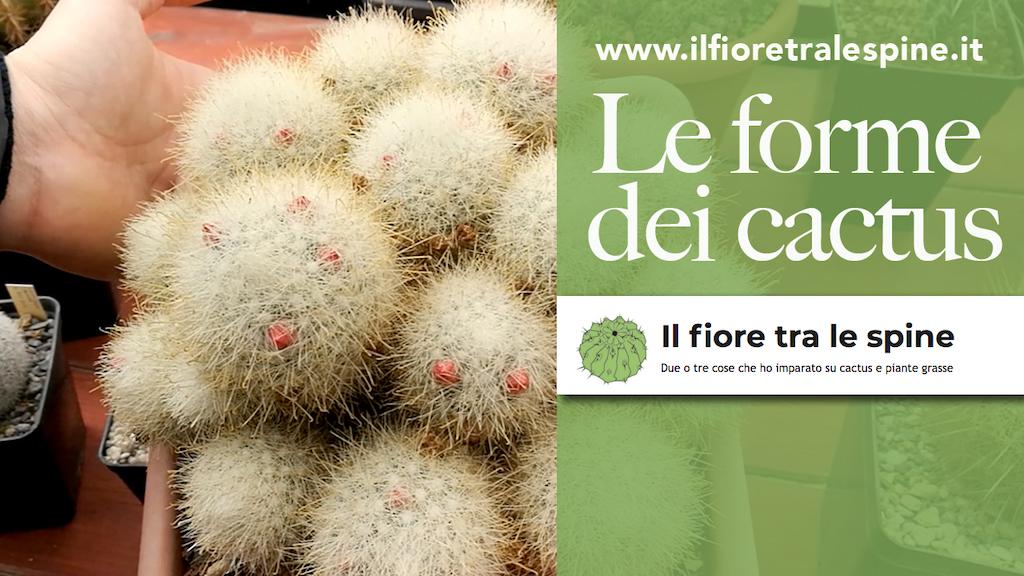 Globosa, colonnare, accestita, ricadente: tutte le forme che i cactus possono assumere