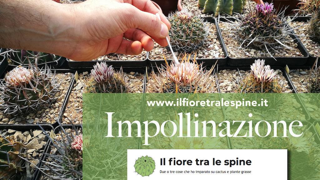 Impollinare i cactus e ottenere semi dalle nostre piante: ecco come fare