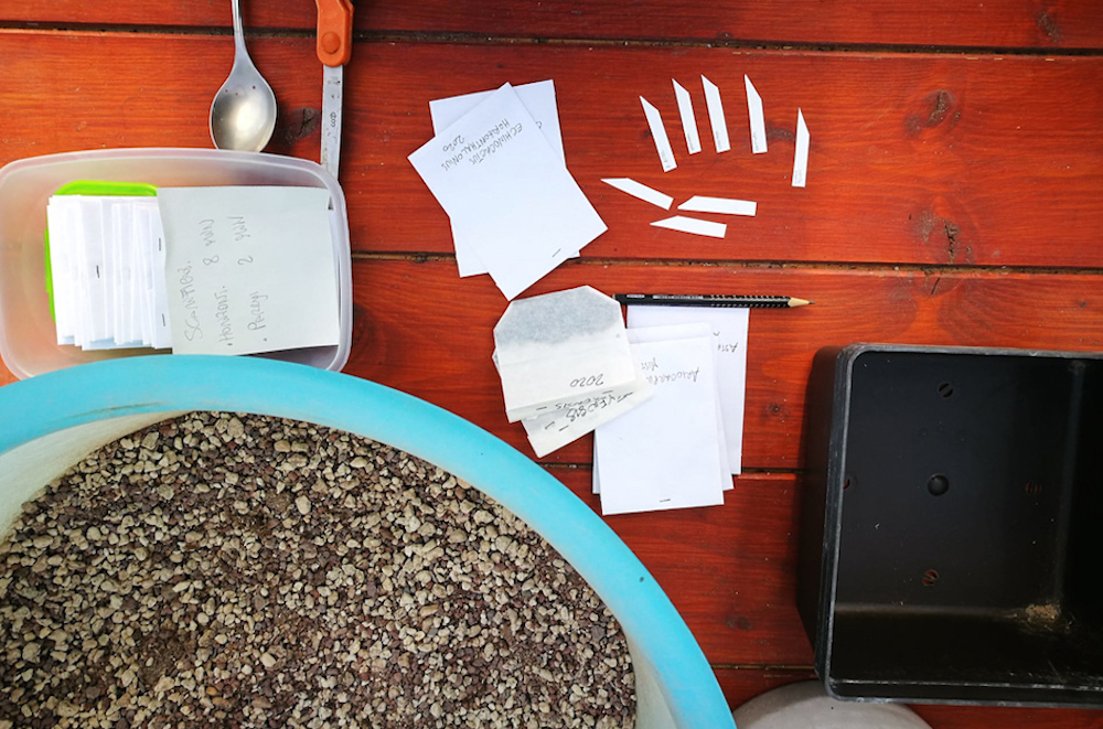 Come seminare i cactus: il metodo della lastra di vetro e la procedura descritta in ogni sua fase