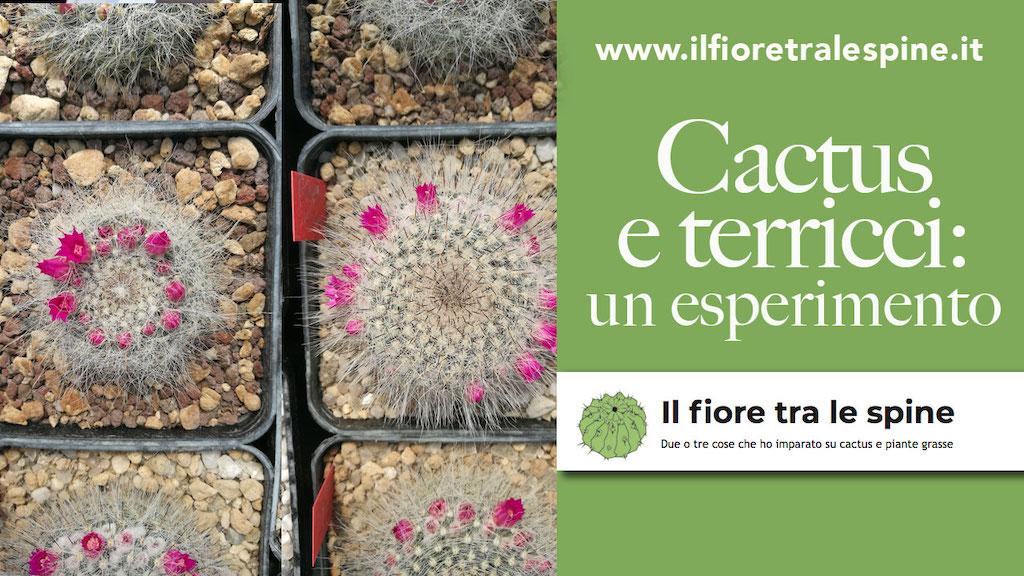 Dopo un anno di coltivazione, i primi risultati del test su sei Mammillaria in tre terricci diversi