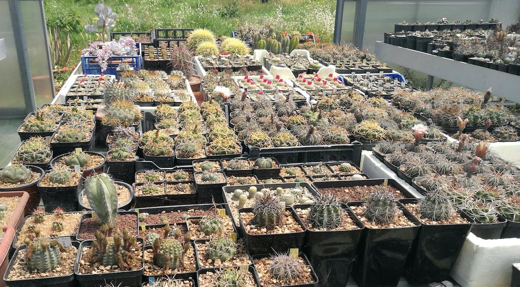 Settembre è un ottimo mese per tutti i cactus, ma attenzione alle giuste cure in vista dell'autunno